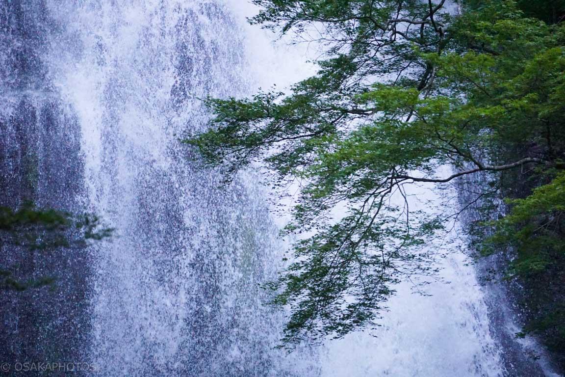 箕面の滝-DSC09356