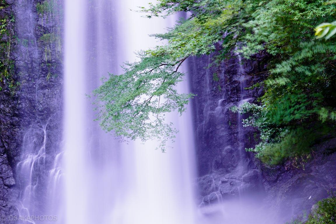 箕面の滝-DSC09384