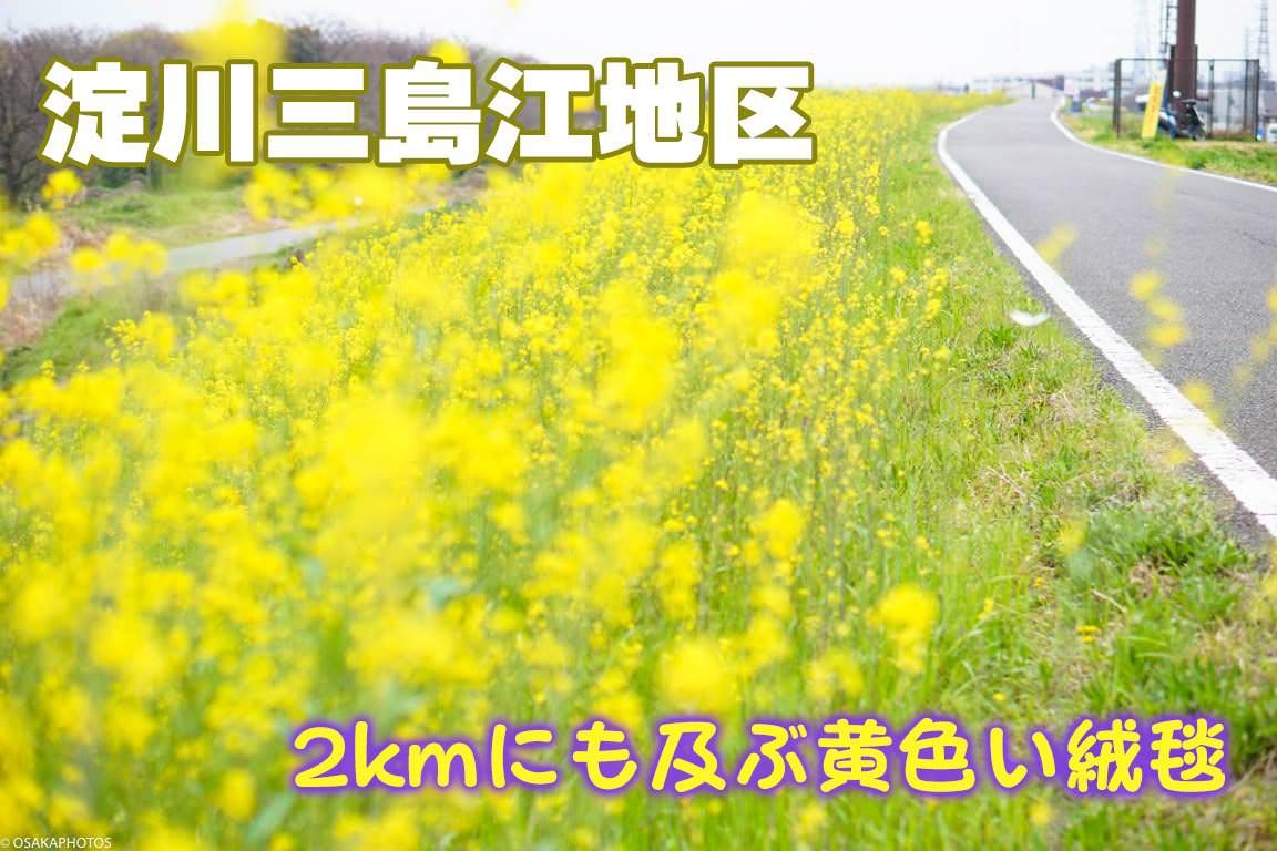 淀川河川公園-07741-2