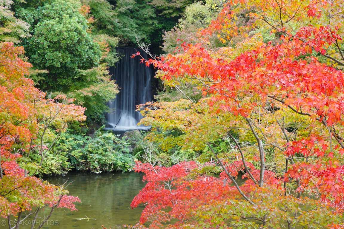 万博記念公園-DSC04863