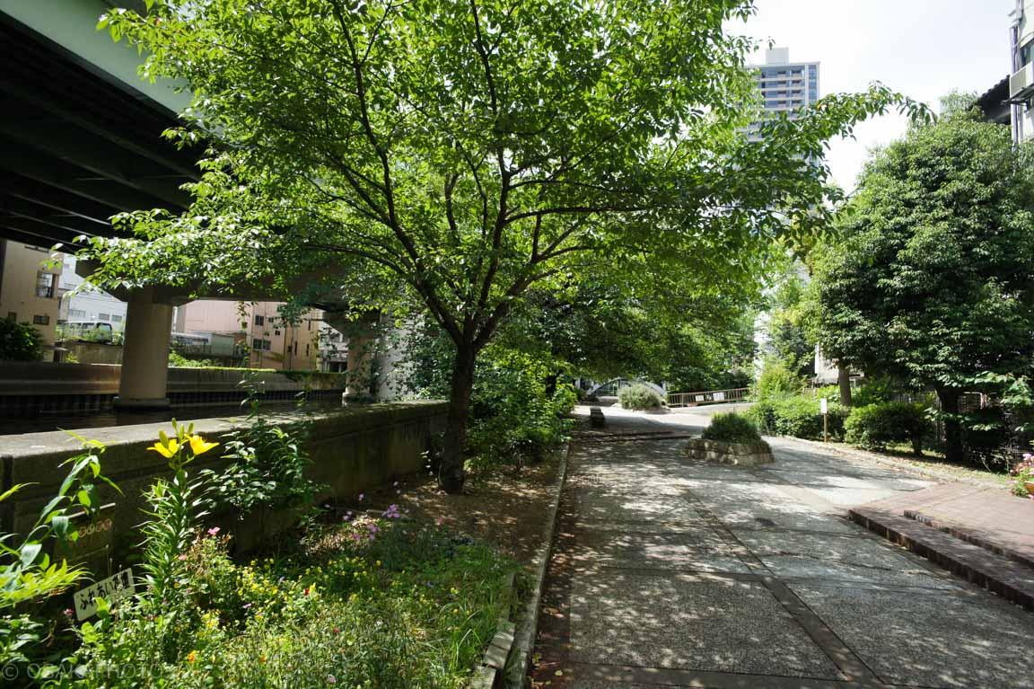 東横堀川-DSC09741