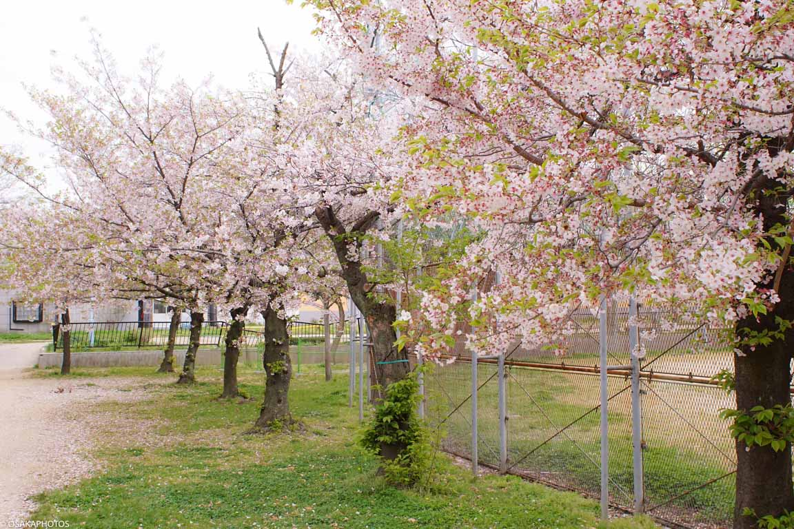 春の天王寺七坂-00590