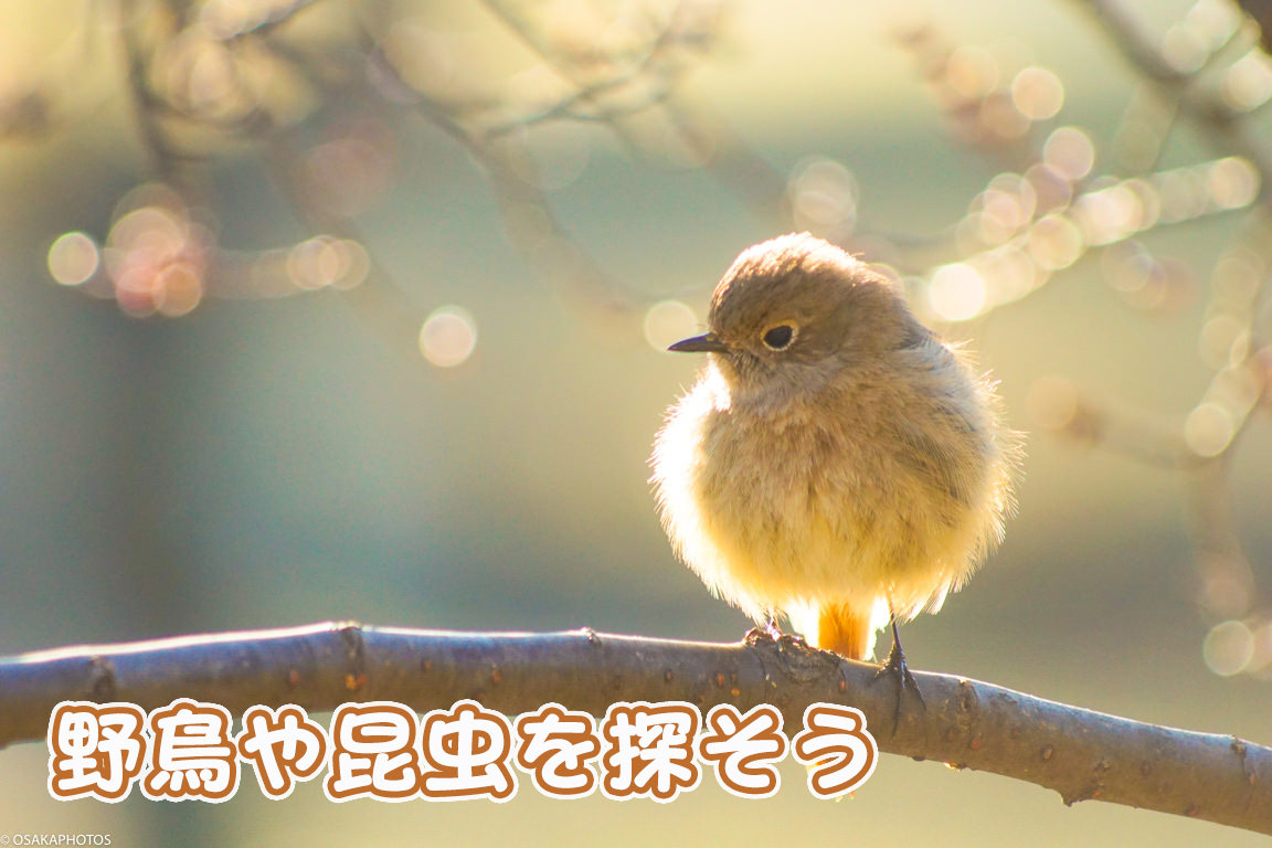 鶴見緑地-DSC06767-2