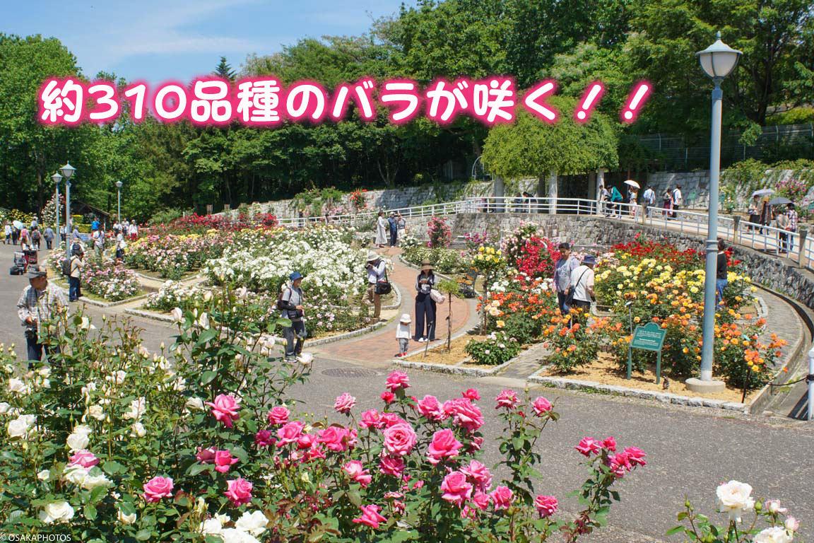 鶴見緑地-DSC07139-2