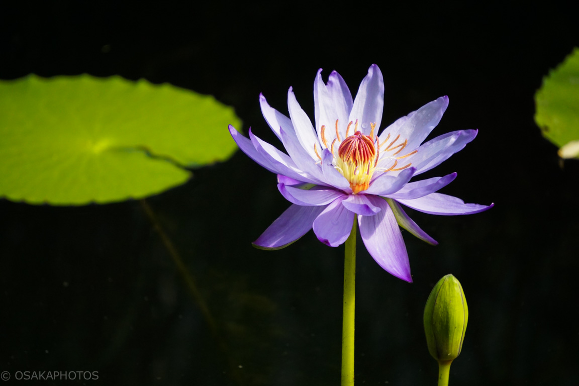 鶴見緑地-DSC04156