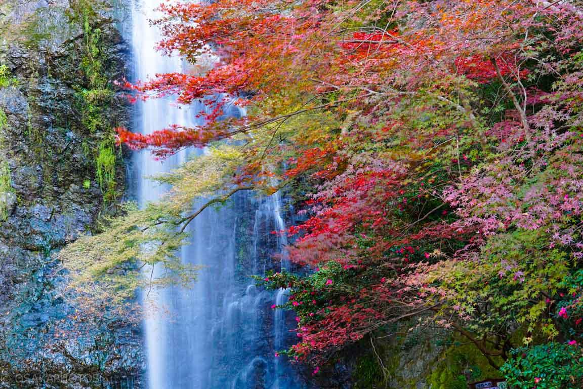 箕面の滝-DSC05560