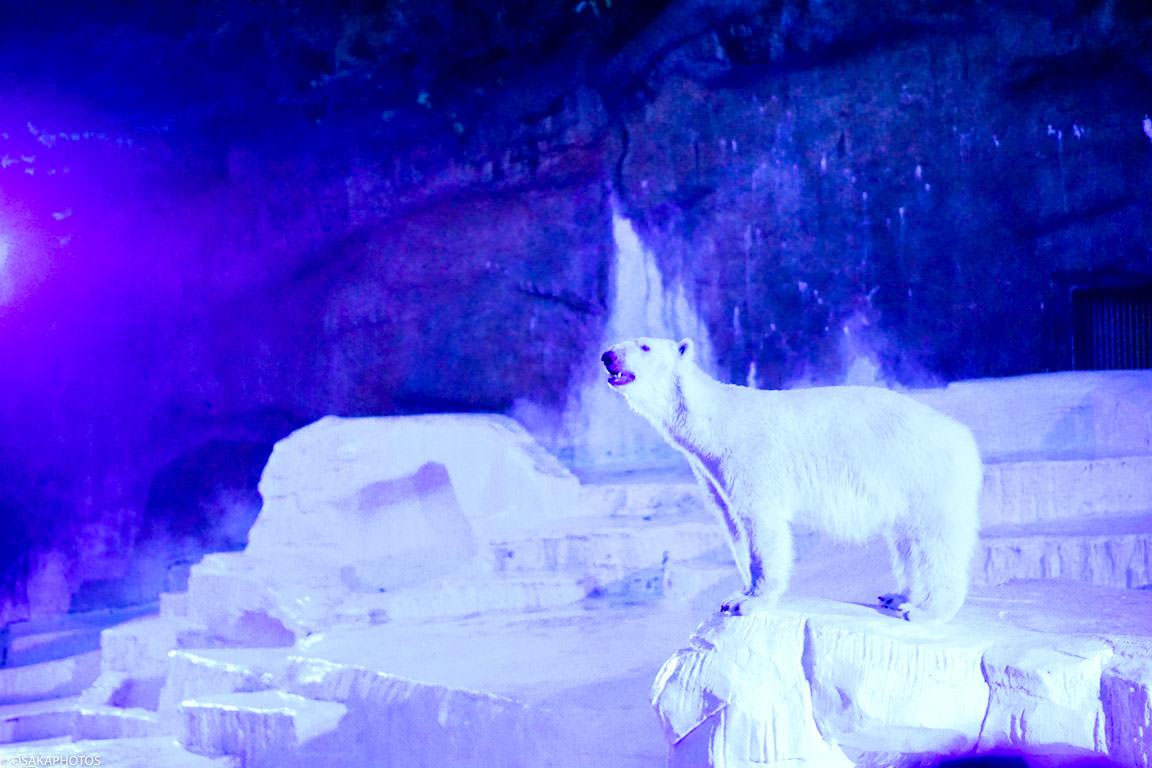 天王寺動物園 DSC00927