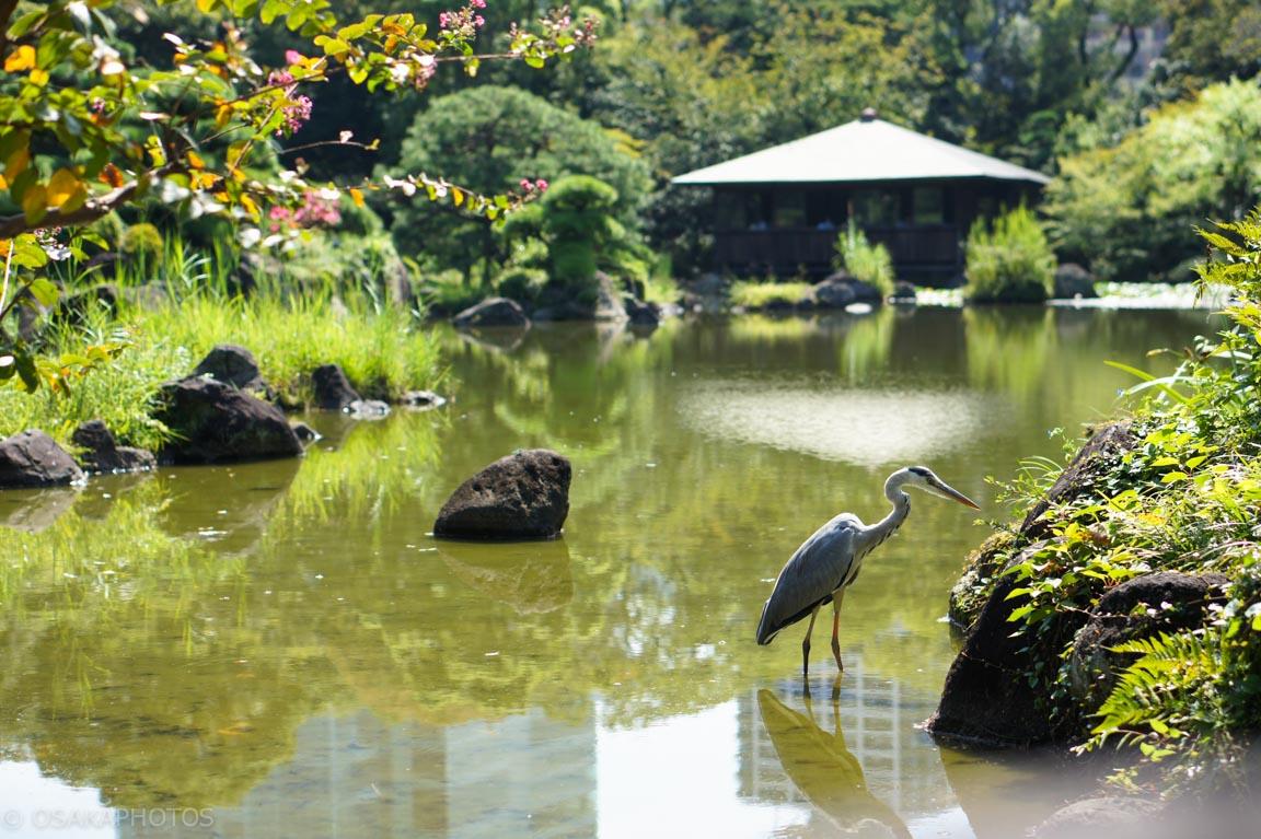 天王寺公園-DSC01279