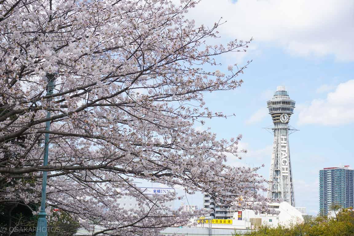 天王寺公園-DSC07185