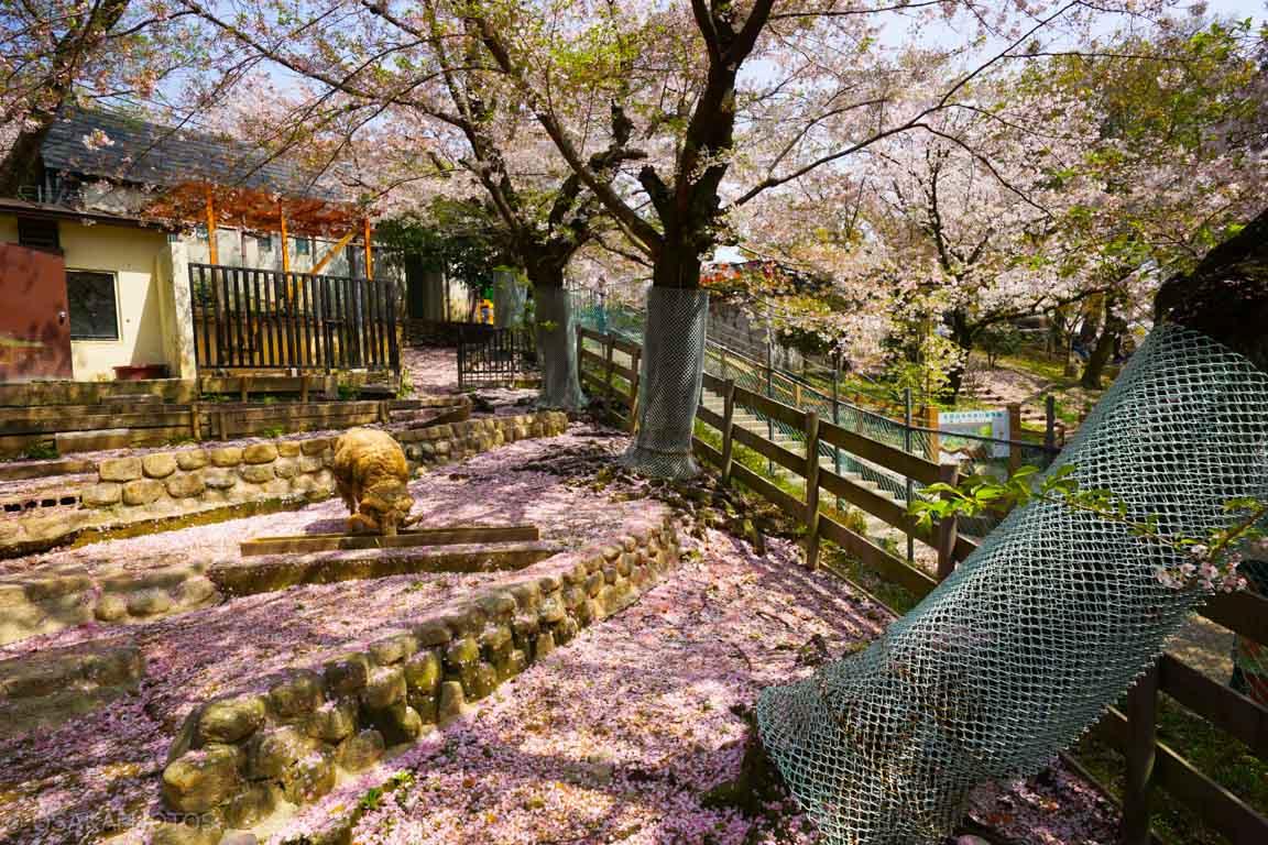 五月山公園-DSC08268