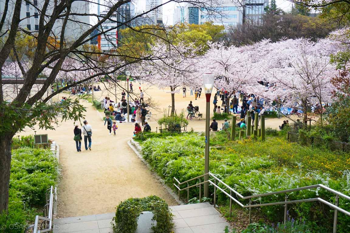 大阪桜-DSC07853