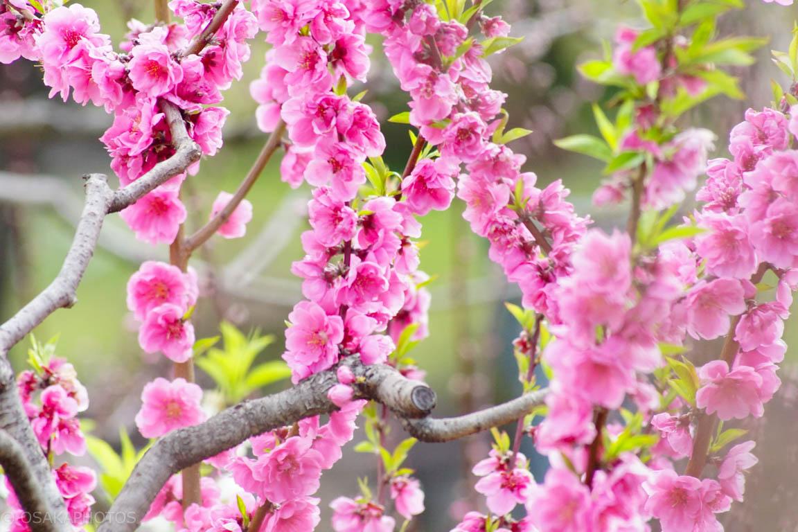 旧藤田邸跡公園-DSC06766