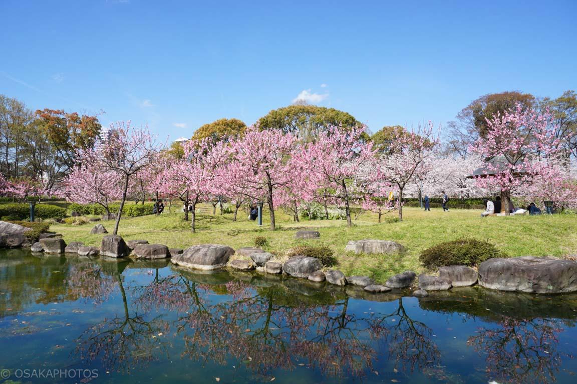 旧藤田邸跡公園-DSC07115