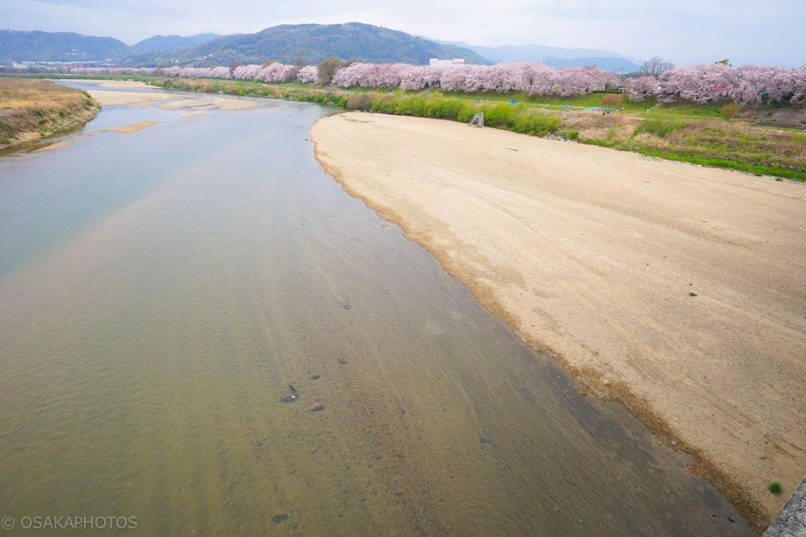 淀川背割堤地区-DSC07459
