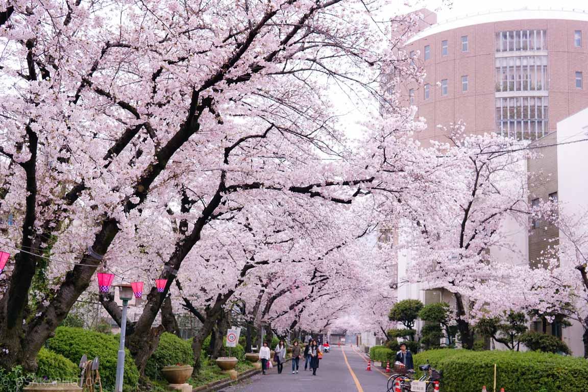 大阪市中浜下水処理場 桜-DSC08540