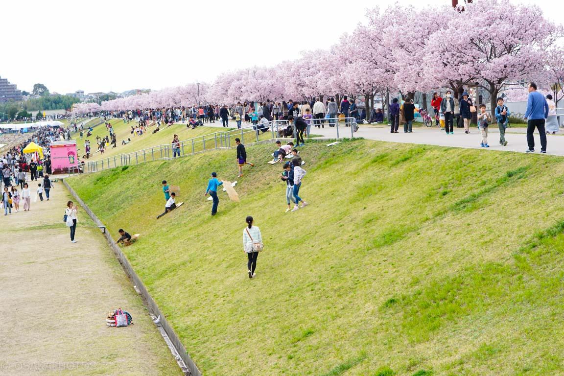 大阪桜-DSC07448