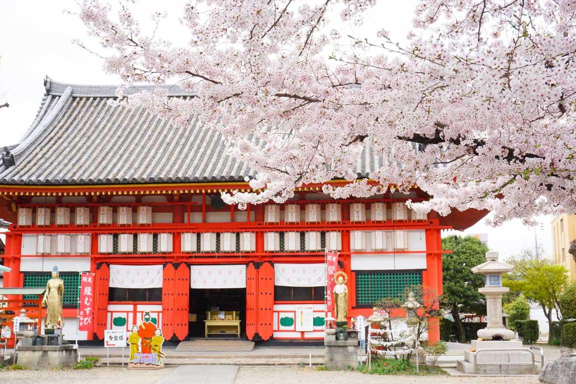 大阪桜-DSC07907