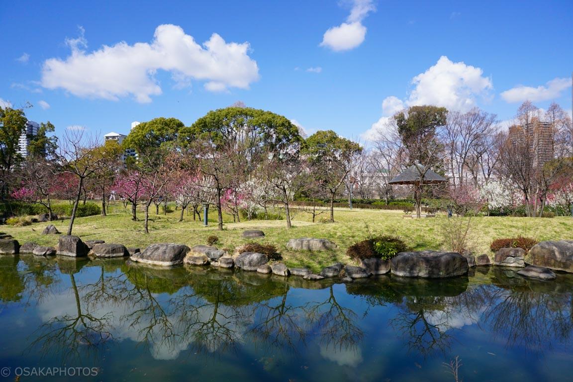 旧藤田邸跡公園-DSC06604