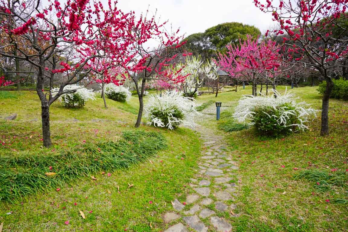 旧藤田邸跡公園-DSC06703