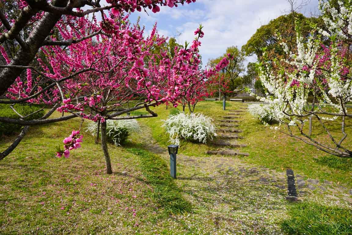 旧藤田邸跡公園-DSC06708
