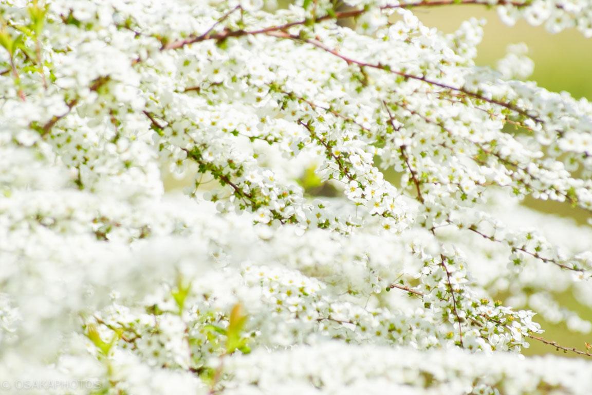 旧藤田邸跡公園-DSC06885