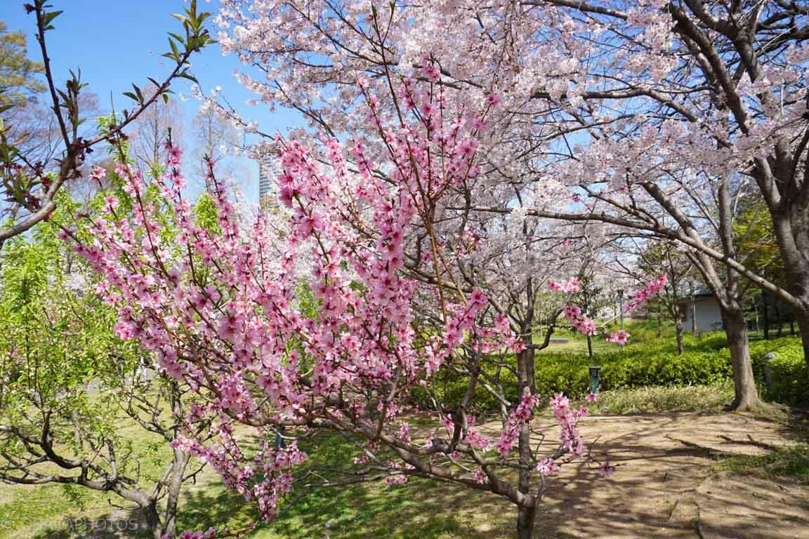 旧藤田邸跡公園-DSC07118