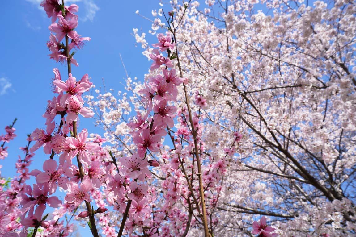旧藤田邸跡公園-DSC07120