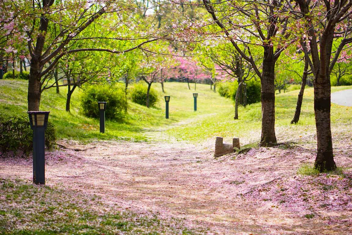 旧藤田邸跡公園-DSC08181