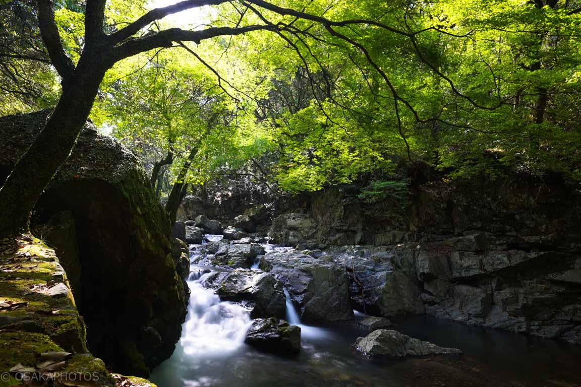 摂津峡公園-DSC09144