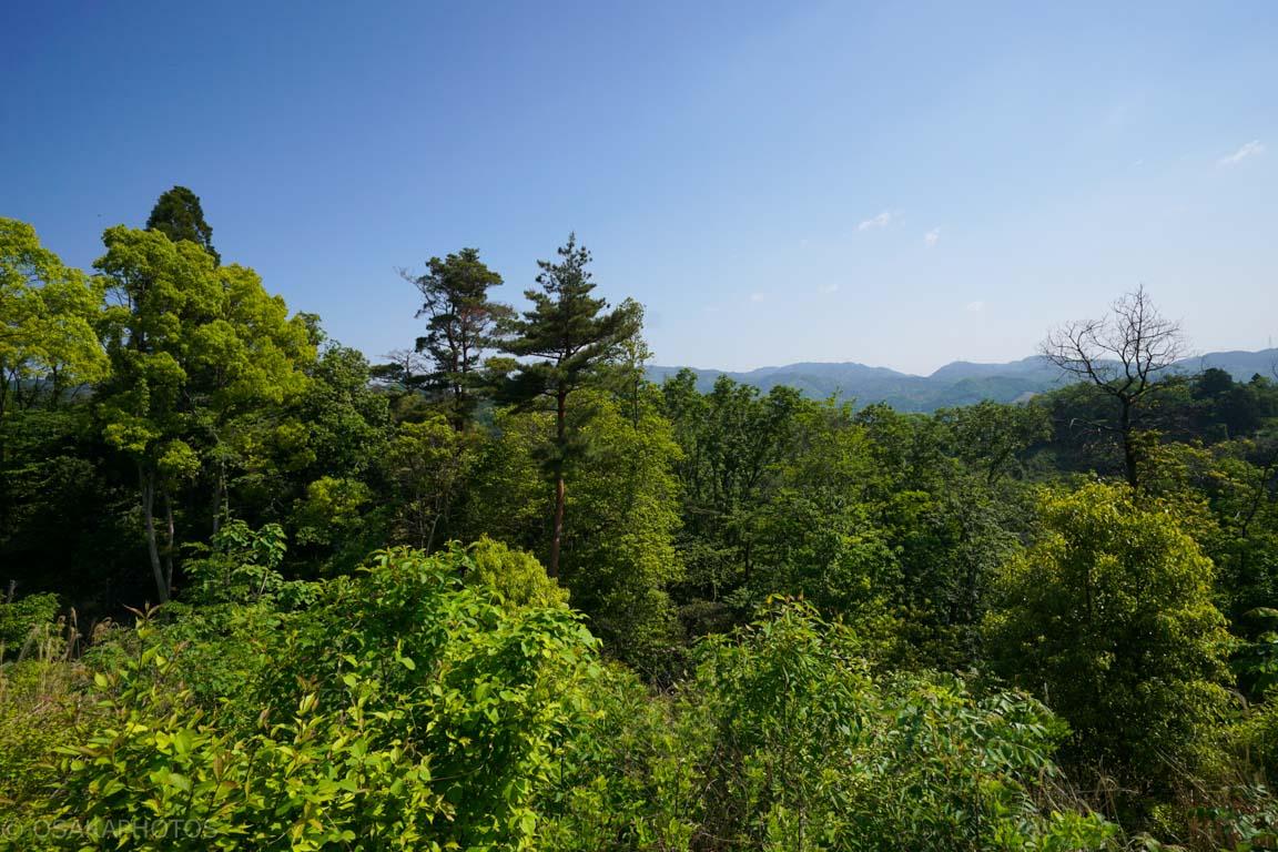 摂津峡公園-DSC09274