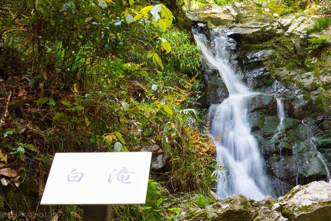 摂津峡公園-DSC09152