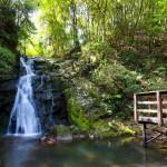 摂津峡公園-DSC09169