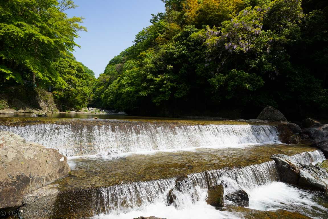 摂津峡公園-DSC09215