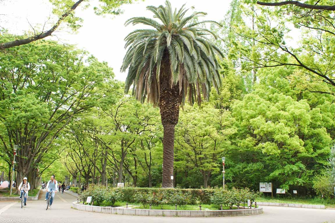 靱公園-01003