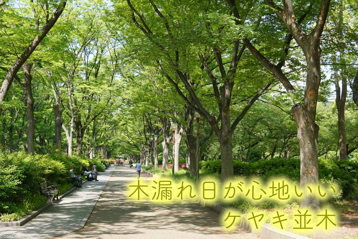 靱公園 DSC07055-2