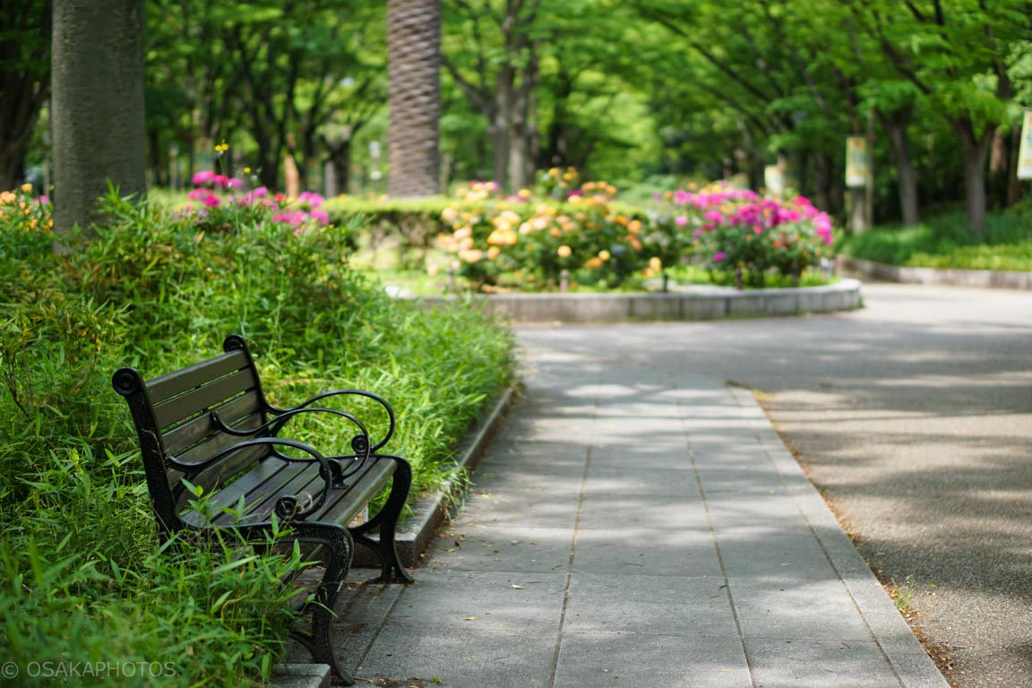 靭公園-DSC09423