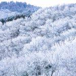 雪の金剛山 20170114