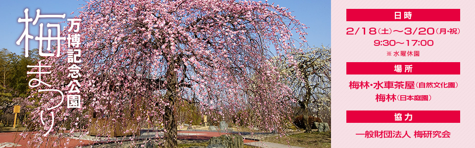 万博記念公園梅祭り2017