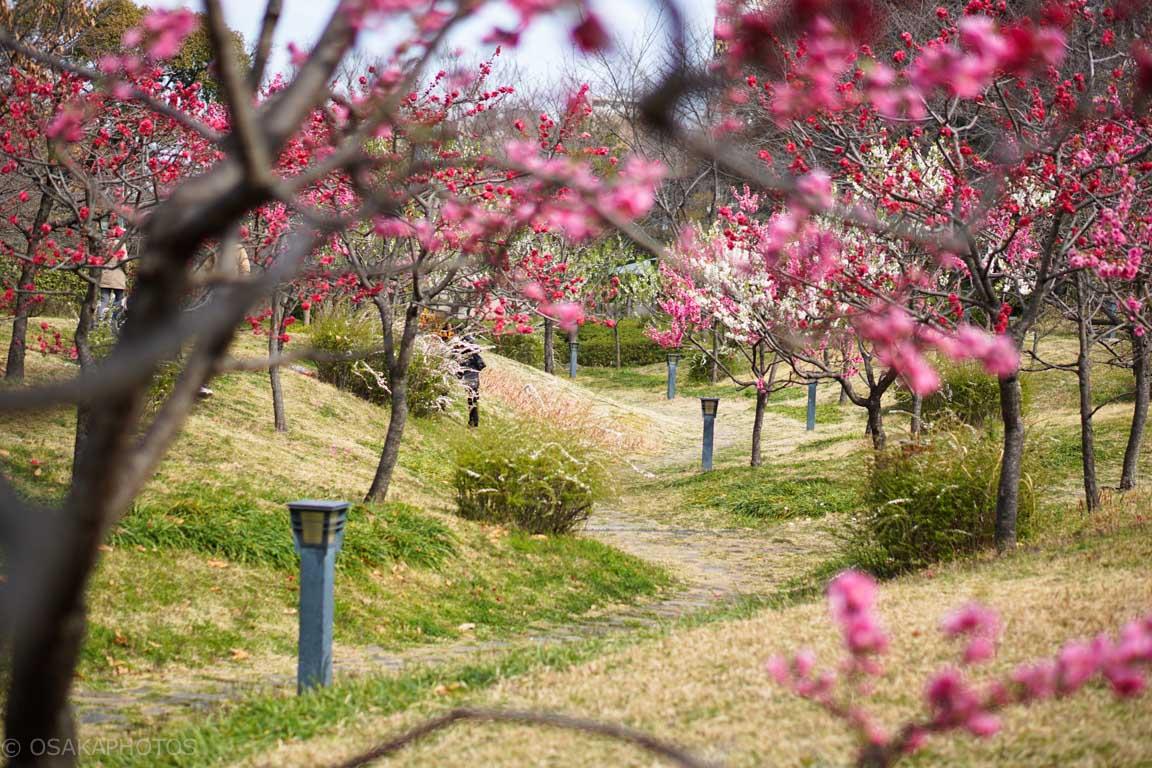 藤田邸跡公園DSC07754