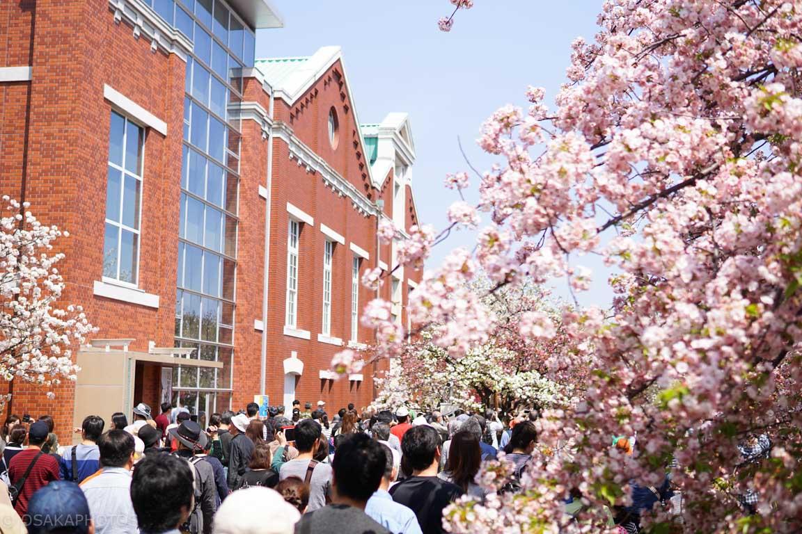 造幣局桜の通り抜け-DSC08767