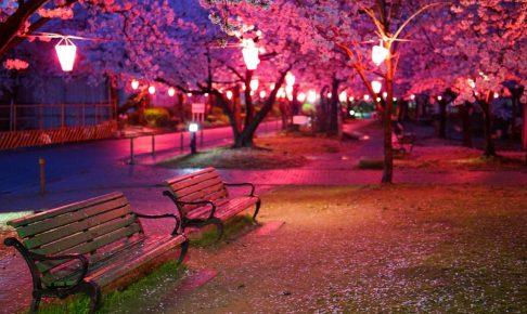 中浜下水処理場-桜-DSC08551