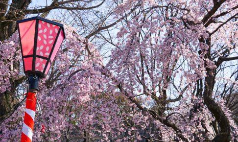 大阪城桜-DSC07942