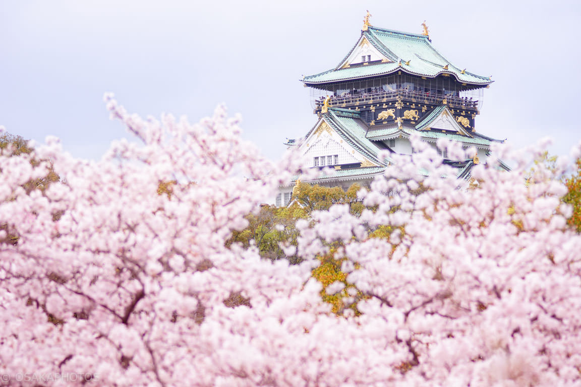 大阪城-桜-DSC08640-2