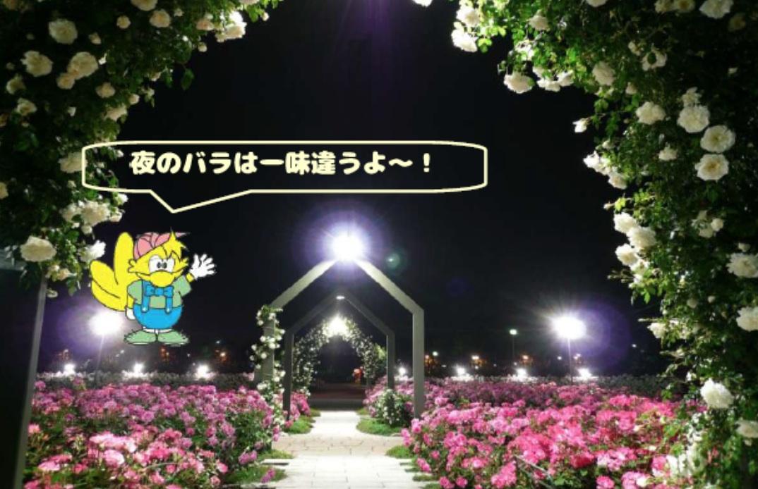 浜寺公園 バラ201705