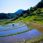 長谷の棚田-DSC01026-2