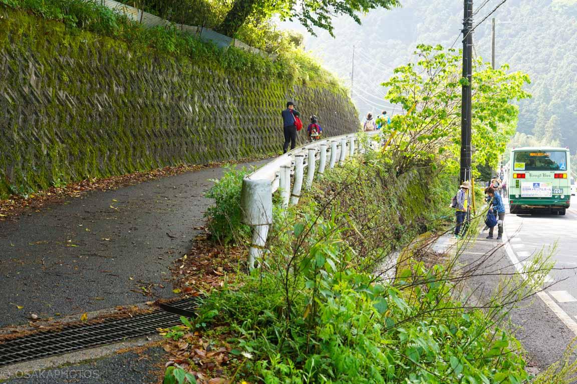 葛城山 自然ツツジ園-DSC00694