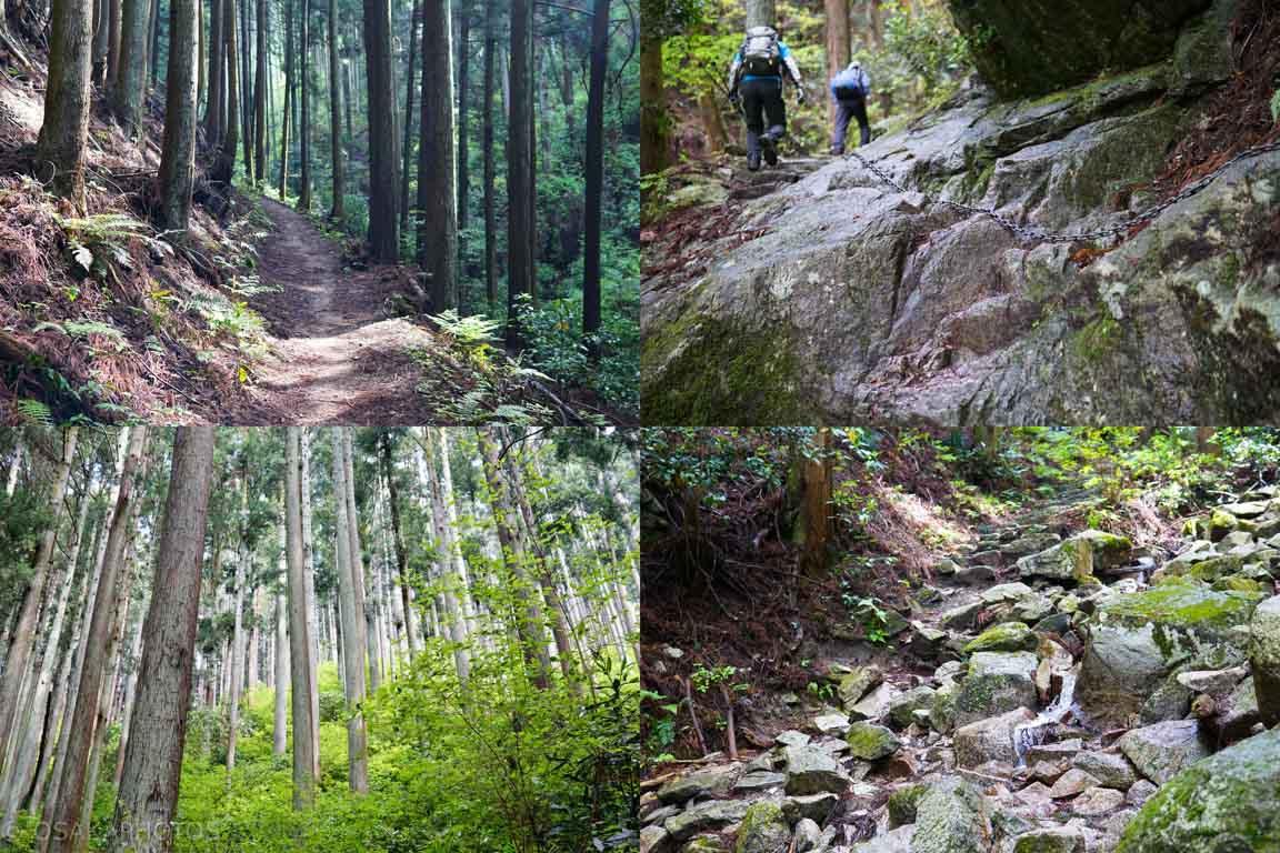 葛城山 自然ツツジ園-DSC00696-2