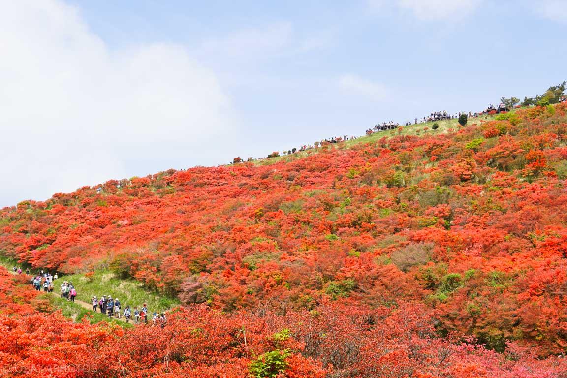 葛城山 自然ツツジ園-DSC00824