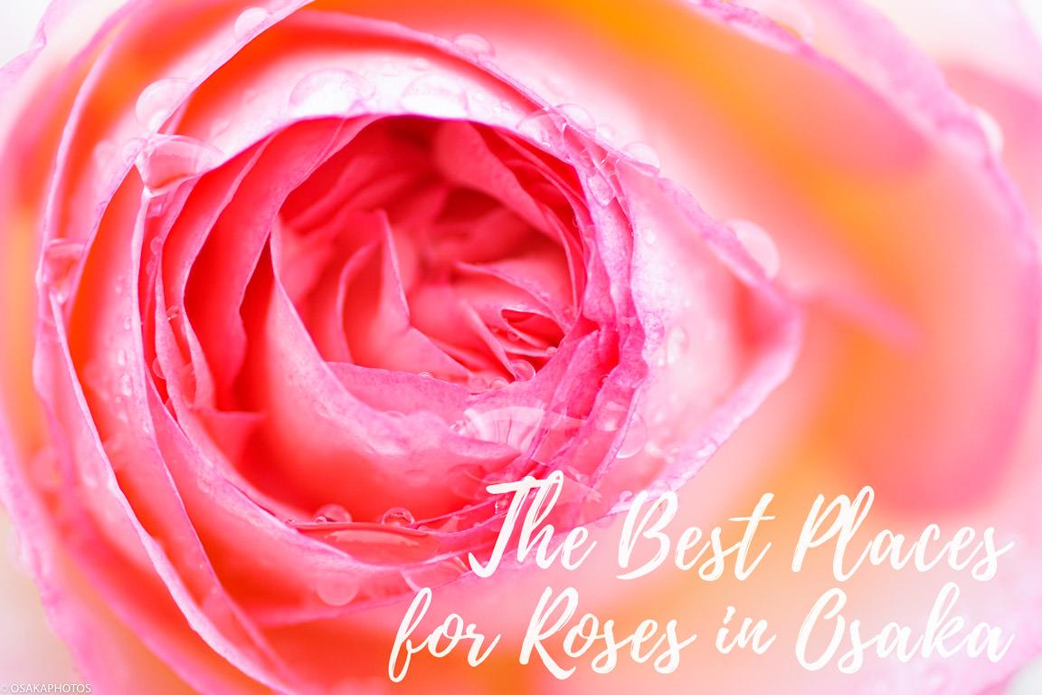 Rose Garden-00603