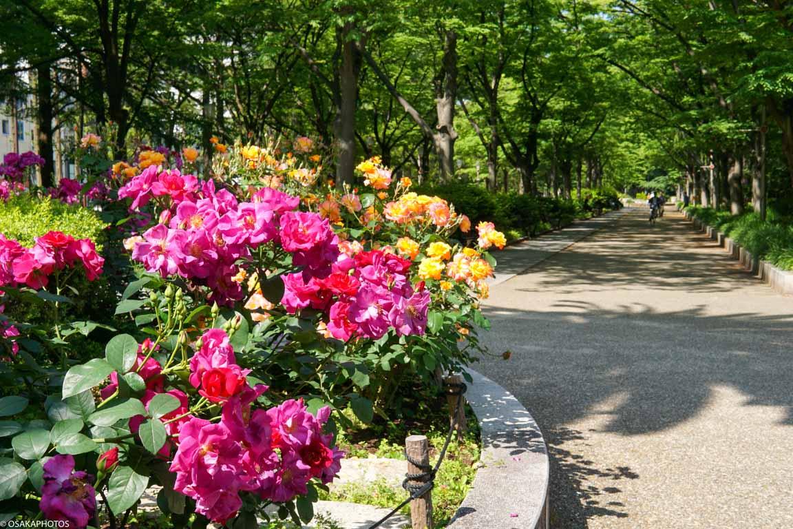 Rose Garden-07065
